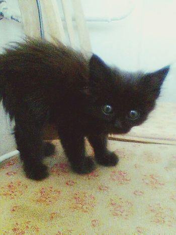 When she was a kitten she was so pretty Kitty Cat Black Cat