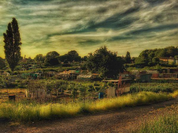 Allotments In The Evening... Allotments Gardening Gardeners Smethwick Urbanphotography Urban Landscape Urban Exploration