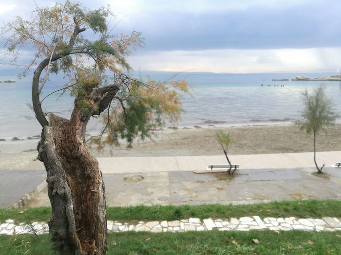 Sea Beach Bacvice Split Croatia Tree