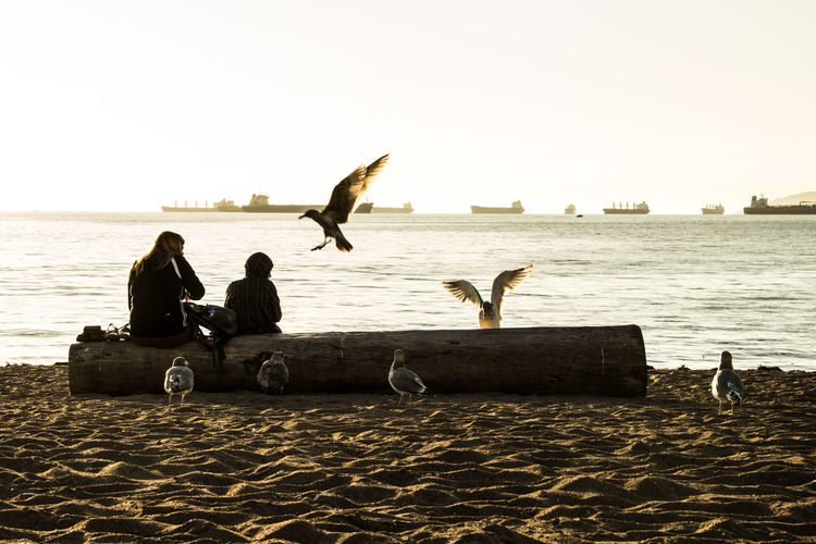 People and seagulls at beach against river and clear sky on sunny day