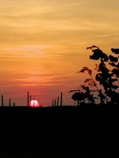 Tree Sunset Silhouette Tree Area Red Dramatic Sky City Sky Landscape Cloud - Sky