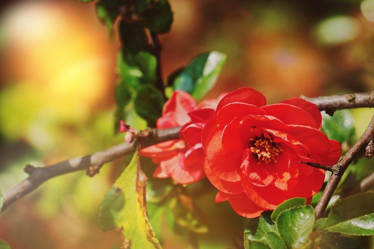 Nature Plant Growth Beauty In Nature Outdoors Focus On Foreground Red Day Close-up Leaf Flower No People Fragility Tree Freshness Flower Head