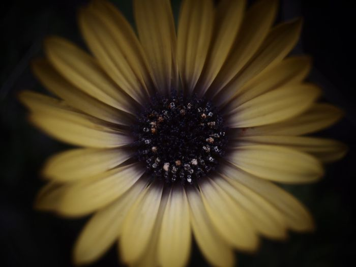 Macro 花 マクロ Flower Petal シック 接写 冬 植物 無加工