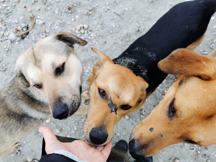 High angle view of hand feeding dog