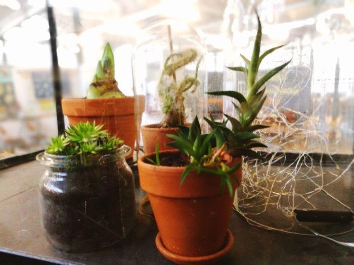 Depot09 Herb Close-up Plant Potted Plant Houseplant Succulent Plant Window Box Barrel Cactus Flower Pot Thorn Cactus