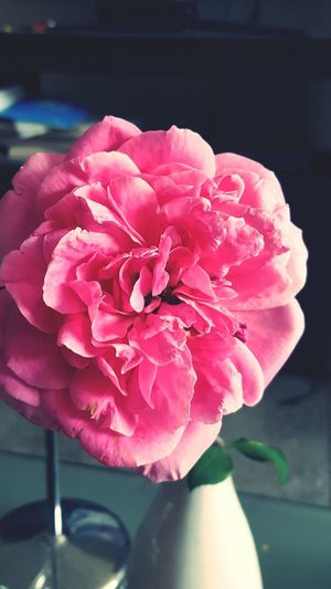 Love speaks and flowers are her tongue Rose🌹 Pink From The Heart Of Nature! Little Things Matter