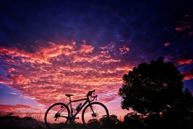 自転車 ロードバイク サイクリング 空 空模様 Night Silhouette Sunset Sky Bicycle No People Scenics Sunrise Tree Beauty In Nature EyeEm Nature Lover EyeEmBestPics EyeEm EyeEm Best Shots Galaxy EyeEm Daily Nature Beauty In Nature Jwellery Luminosity Nature