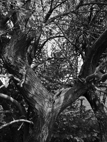 Tree Growth Nature Day Outdoors Low Angle View Branch Tree Trunk No People Beauty In Nature Close-up Landscape_photography Blackandwhite Photography Black&white Growth Nature Metz, France Landscape Moselle Bnw_collection Bnw_demand Noir Et Blanc Photographie Noir & Blanc  Bnwphotography Bnwmood