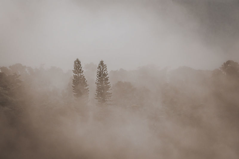 View of tree in foggy weather