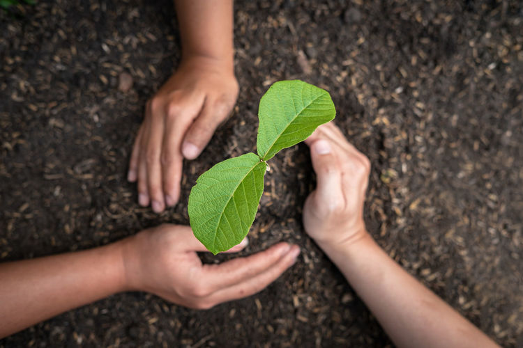 Cropped image of woman hand holding leaves