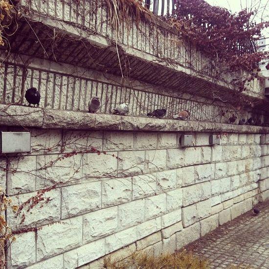 새 비둘기 서열순으로 앉아있는거제? 길거리