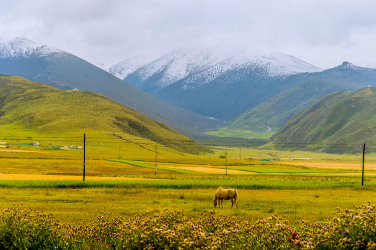 Side view of horse grazing on land against mountains