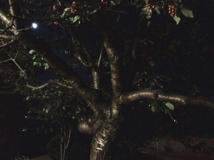 Night Sky Trees Cherries Moon Landscape