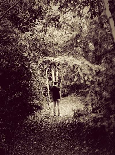 ArtWork My Artwork Exploring Woods