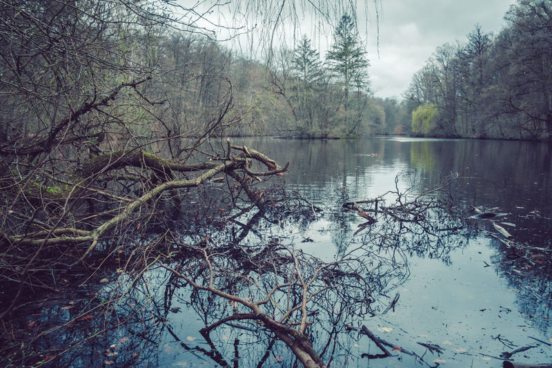 Bare Tree Beauty In Nature Branch Color Eye4photography  EyeEm Nature Lover Forest Graded Growth Lake Nature No People Outdoors Scenics Sky Tranquil Scene Tranquility Tree Water Woods
