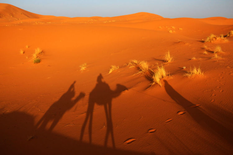 Shadow Of People And Camels In Desert Against Sky