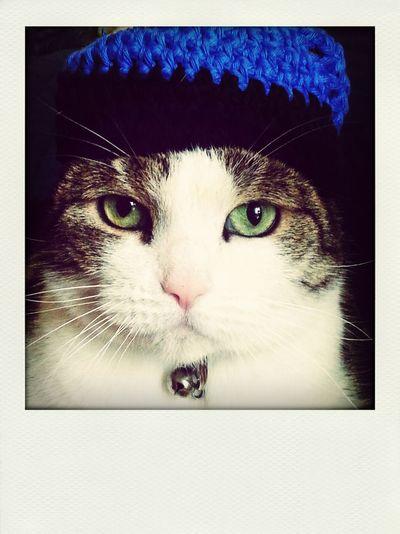 Marty mit Mütze