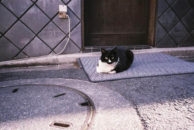 Portrait of cat relaxing on doormat