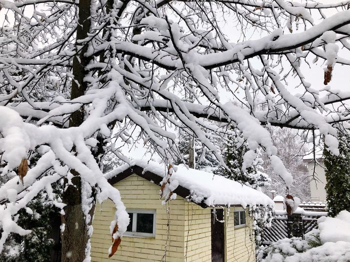 Tree Built Structure Architecture Building Exterior Plant Building Day Growth Nature House No People Branch Outdoors Snow Cold Temperature Winter