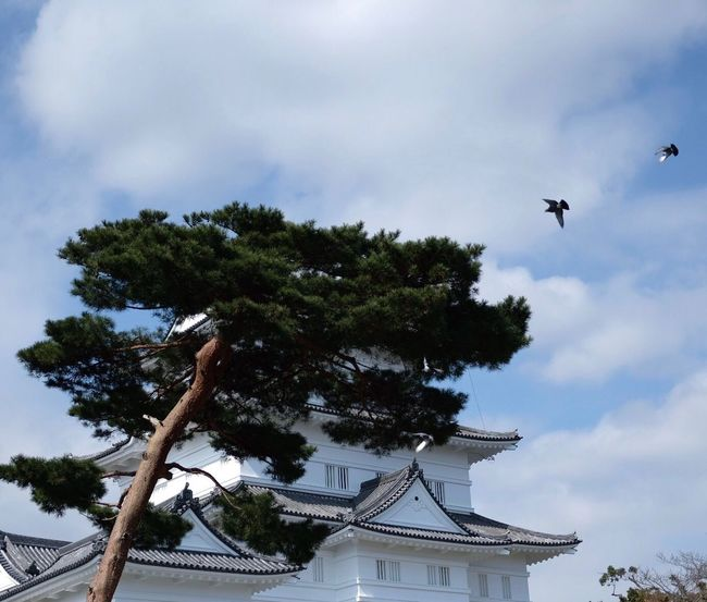Odawara Castle Sky Tree Flying Built Structure Low Angle View Animal Themes One Animal Cloud - Sky Day Nature Nautical Vessel Outdoors Building Exterior Architecture Animals In The Wild No People Bird Odawara Japan Photography