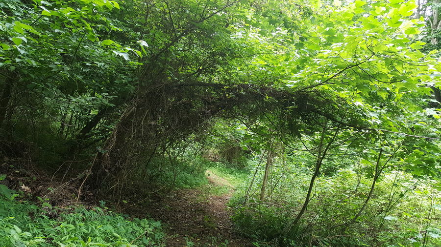 Overhanging vines like arbor Green Color Sunlight Outdoors Growth Backgrounds Nature Shadow Day Summertime Trellis Like EyeEmNewHere