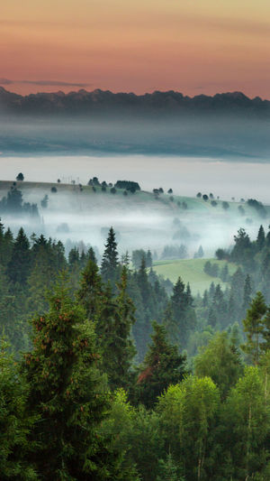 Scenic View Of Landscape In Foggy Weather During Sunrise