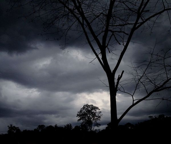 Black - cloud Tree Nature Sky Silhouette Bare Tree Cloud - Sky Tranquility Beauty In Nature Branch No People Scenics Outdoors Low Angle View Lone Day Borneo goodbye - grandpa