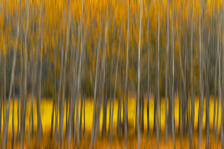 Fall color abstract in the form of blurred trees Autumn Autumn colors Abundance Backgrounds Beauty In Nature Blue Blurred Motion Close-up Day Fall Full Frame Growth Icm Landscape Leaf Motion Nature No People Orange Color Outdoors Pattern Plant Selective Focus Tree Yellow