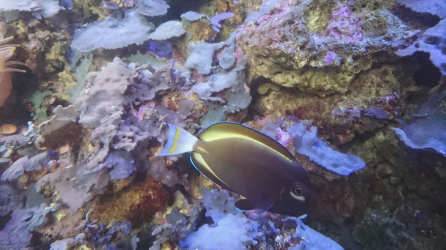 Nature Underwater Water No People Beauty In Nature Multi Colored UnderSea Outdoors Animal Themes Day Sea Life Beauty In Nature Objects Of Interest Estonia Nature Aquarium Fish One Animal Close-up Built Structure Animal_collection UnderSea Fishes Fishes 🐠 EyeEmNewHere