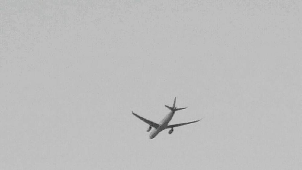 Plane View April Showcase