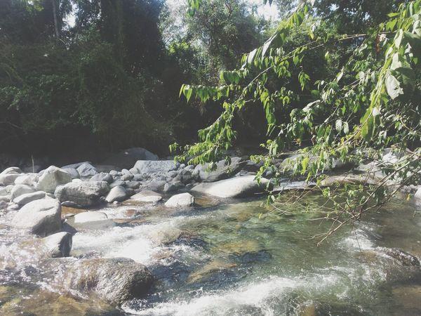 Ri Summer ☀ Honduras La Ceiba Naturalna Eyeem Fauna