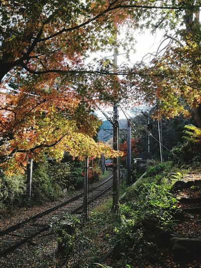 Tree No People Growth Sky Nature Outdoors Day City Beauty In Nature 箱根 箱根登山電車 箱根登山鉄道 大平台