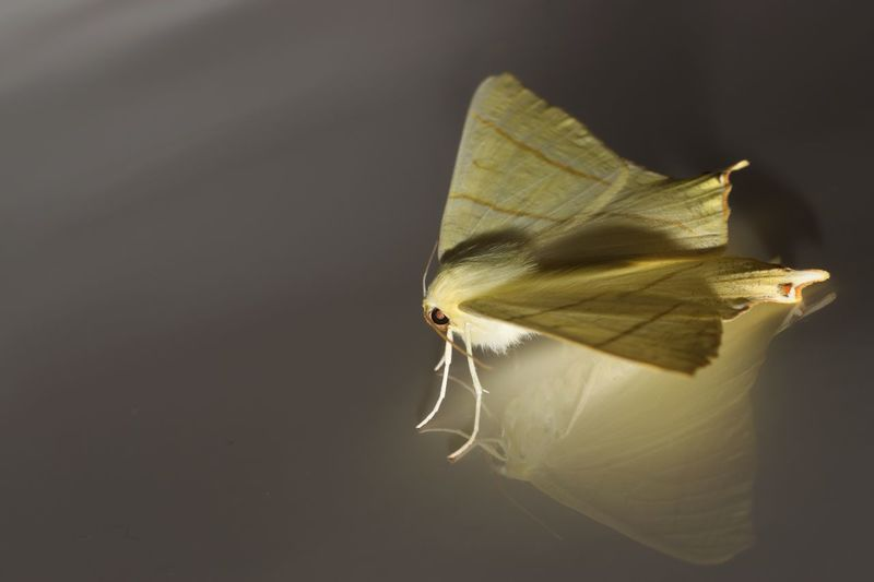 EyeEm Best Shots Moth Close-up Fragility Beauty In Nature Insect No People Animal Wildlife Vulnerability  Nature Invertebrate Focus On Foreground Animal Wing Animal One Animal