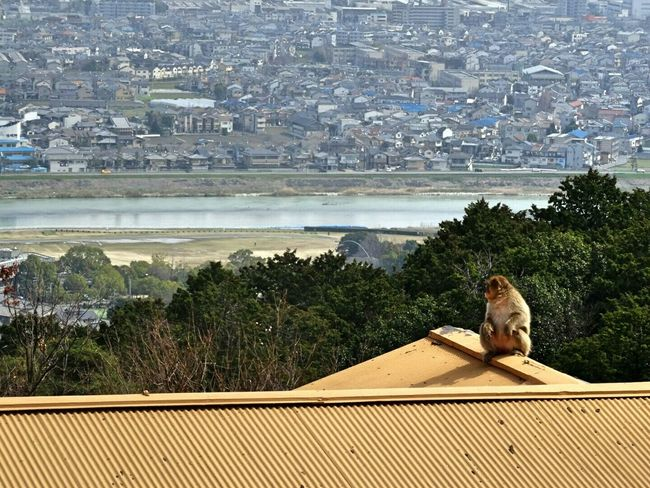 Holiday 日本 京都 EyeEm Gallery EyeEm Best Shots Monkey City View
