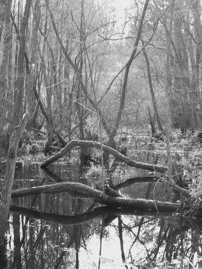 Bw_collection EyeEm Nature Lover EyeEm Selects Nature_collection EyeEm Best Shots - Nature Blackandwhite Photography Monochrome EyeEm Best Shots - Black + White EyeEm Best Shots EyeEmBestPics