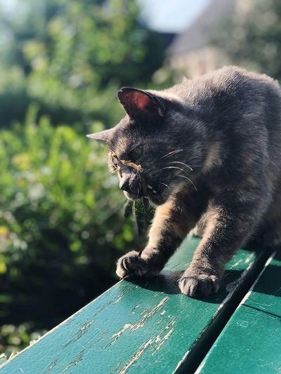 Meow One Animal