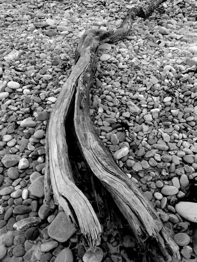 Same piece of driftwood Uk Scotland Eye Em Scotland Lossiemouth Lossiemouth West Beach B/w Collection B/W Photography B/w B/w Daily Washed Up On Beach Driftwood Beachphotography Beauty In Nature Wood Landscape Full Frame Beaches Of Eyeem Backgrounds Pebble Beach Wooden Wood - Material Beaches Of The World Pebbles Sand Beach Walks