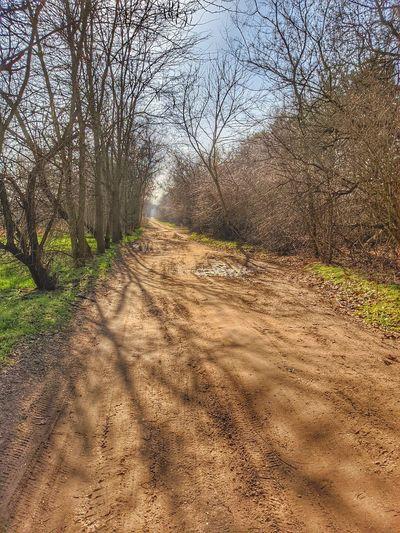 Dirt road along bare trees