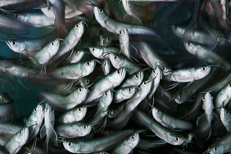 Full frame shot of fishes for sale in market