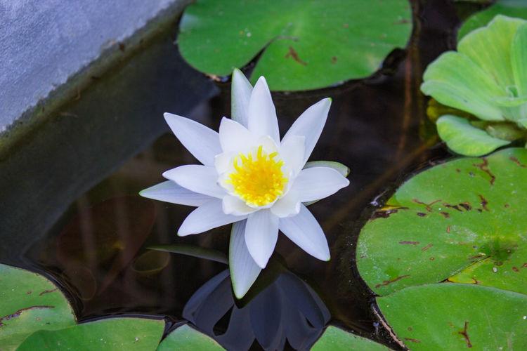 Flower Water Garden