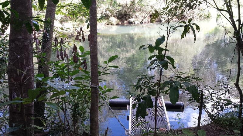 Australia Calm Creek Idyllic Jetty Lake Nature No People Non-urban Scene Outdoors Pontoon Rainforest Reflection Tranquil Scene Tree Water
