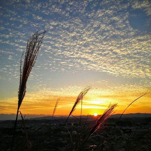 巻積雲 うろこ雲 鱗雲 夕陽 夕焼け すすき