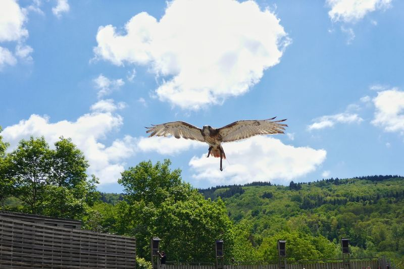 Animal Themes Avian Beauty In Nature Bird Of Prey Blue Cloud Cloud - Sky Cloudy Courzieu Day Green Color Growth Low Angle View Nature No People Oiseaux Outdoors Parc Animalier De Courzieu Sky Spread Wings Tree Wildlife