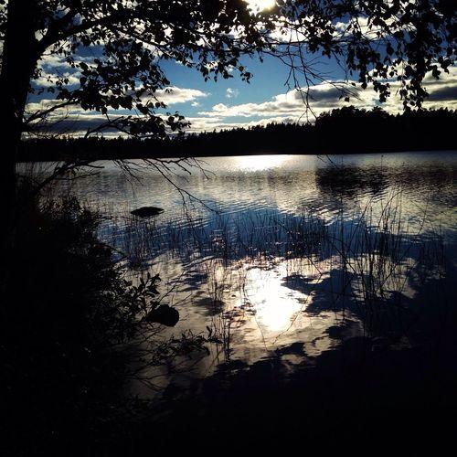 Enjoying The View Walking Around Nature Vittsjönu