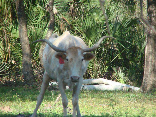 Domestic Animals Mammal Livestock Animal Themes Day Outdoors No People