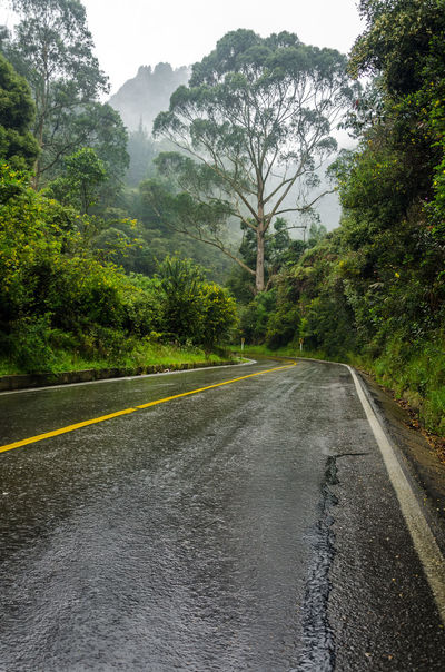 A road leading into a lush mist shrouded forest Asphalt Avenue Concret Day Fog Foggy Forest Gray Green Grey Highway Horizon Leaves Lonely Nature Outdoors Road Route Scenics Street Tree Tree Trees Way Wet