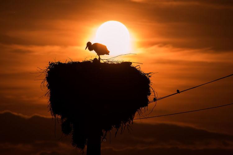 Silhouette bird on a orange sunset