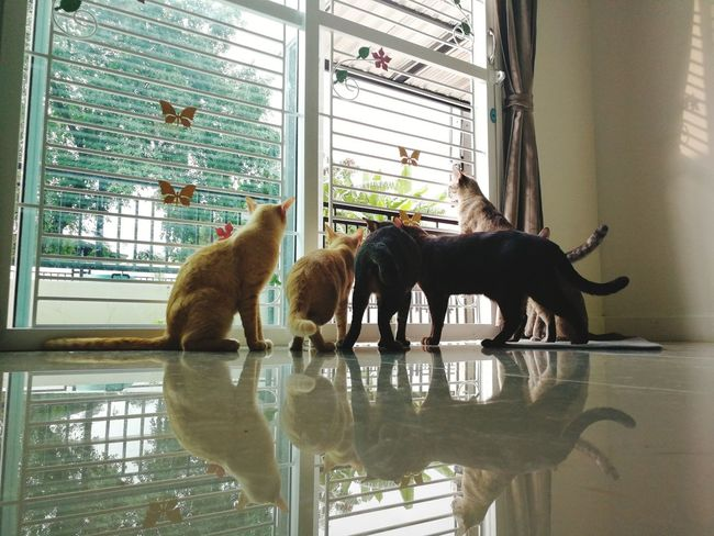 Cat Cat Thailand :) Animal Wildlife Animal Bear Animal Themes Indoors  Mammal Animals In The Wild