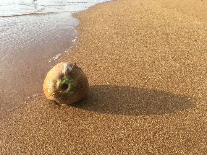 High angle view of fruit on beach