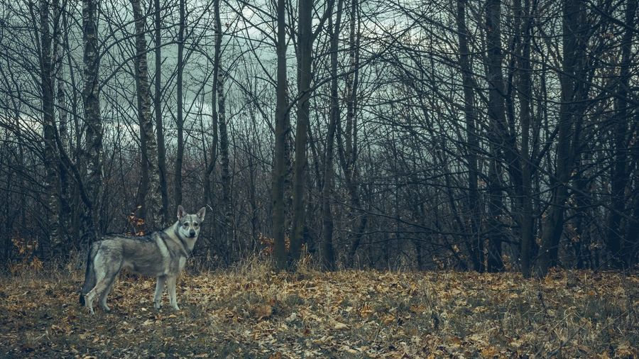 View of dog in forest
